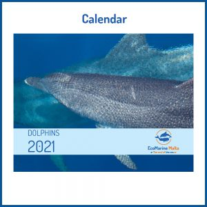 buy your dolphins calendar